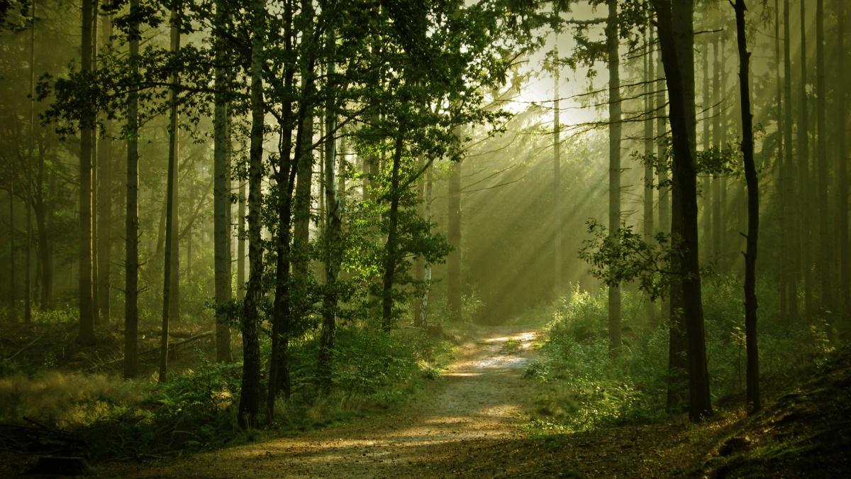 #UnRacconto: La cosa nella foresta di Antonia Byatt